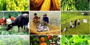 Thiết kế web nông lâm nghiệp chuyên nghiệp, chuẩn SEO