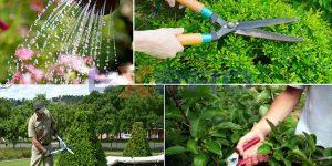 Thiết kế web dịch vụ chăm sóc cây cảnh, bon sai chuyên nghiệp, chuẩn SEO